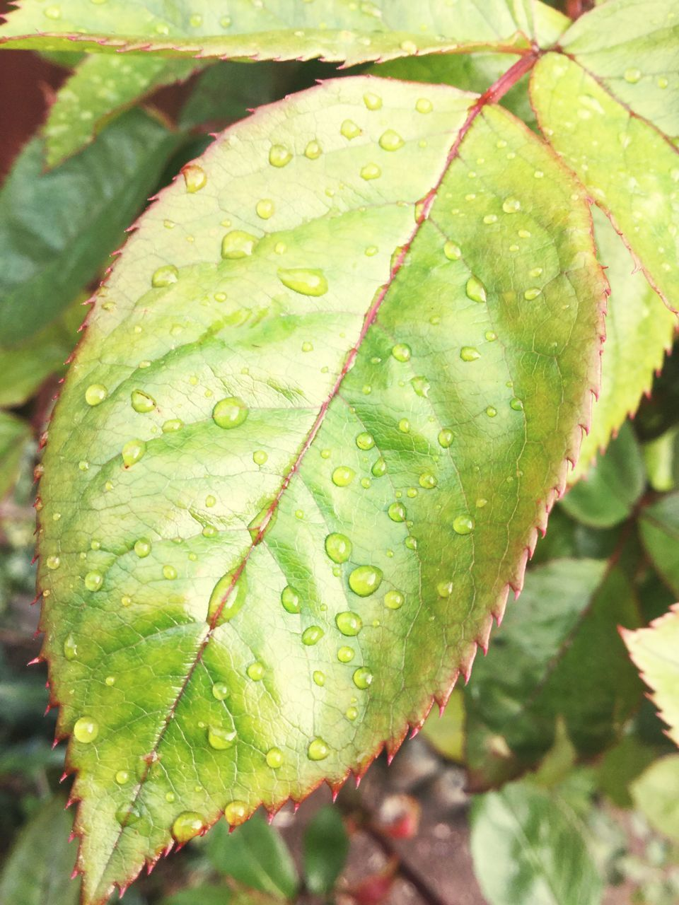 leaf, green color, nature, close-up, drop, growth, water, beauty in nature, day, no people, wet, plant, outdoors, freshness, fragility