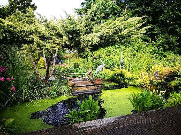 What a garden Nature Growth Tree Water Day Outdoors Green Color No People Beauty In Nature Grass
