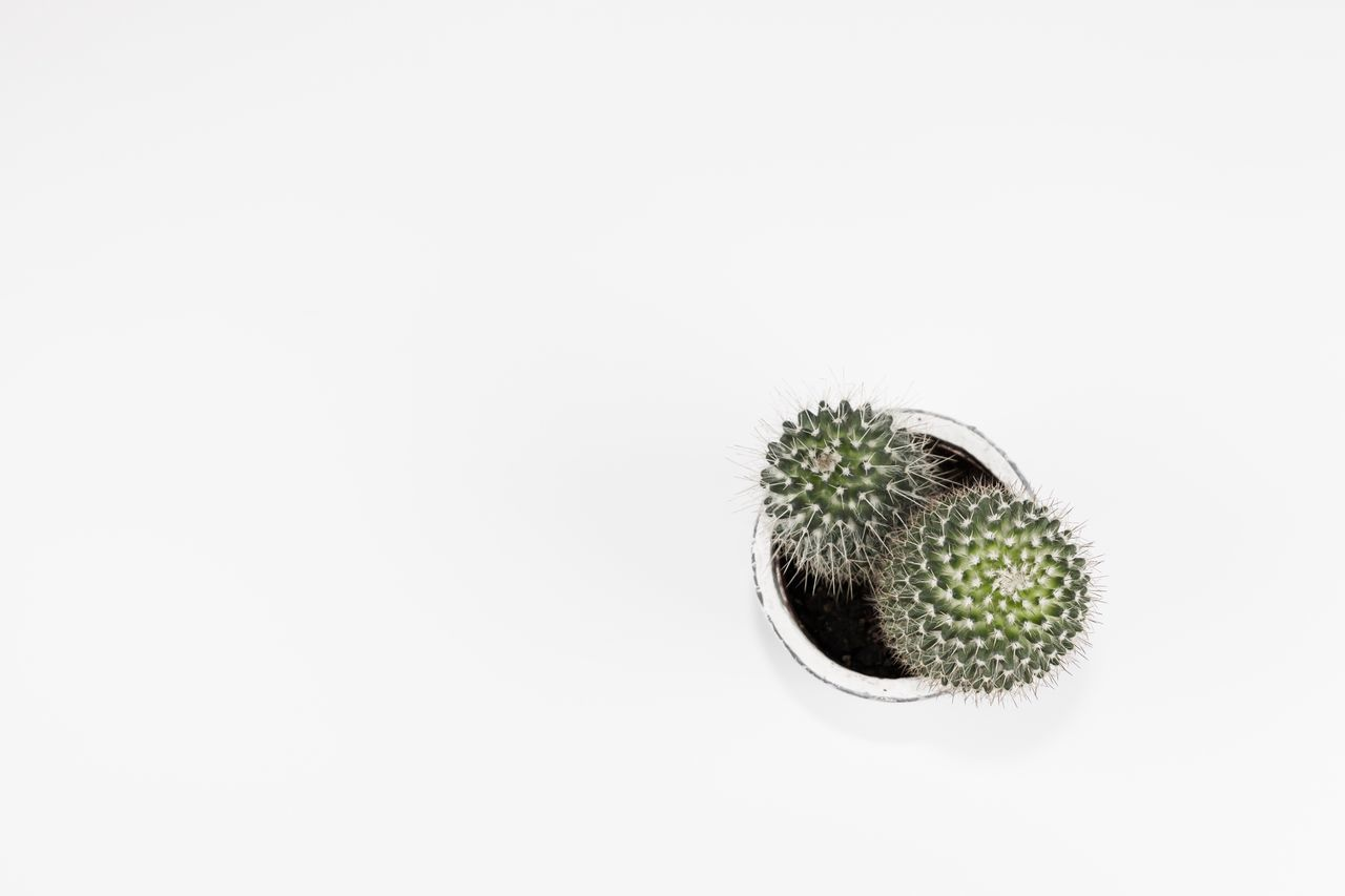 Cactus from above - Dramatic Angles Exceptional Photographs The Week Of Eyeem First Eyeem Photo Hello World Minimalism Simplicity White Background Still Life Photography EyeEm Masterclass EyeEm Best Edits TakeoverContrast Studio Shot Still Life From Above  Cactus Thorn Flowers Green Minimalistic Minimalobsession EyeEm Best Shots Eye4photography  From My Point Of View White Color