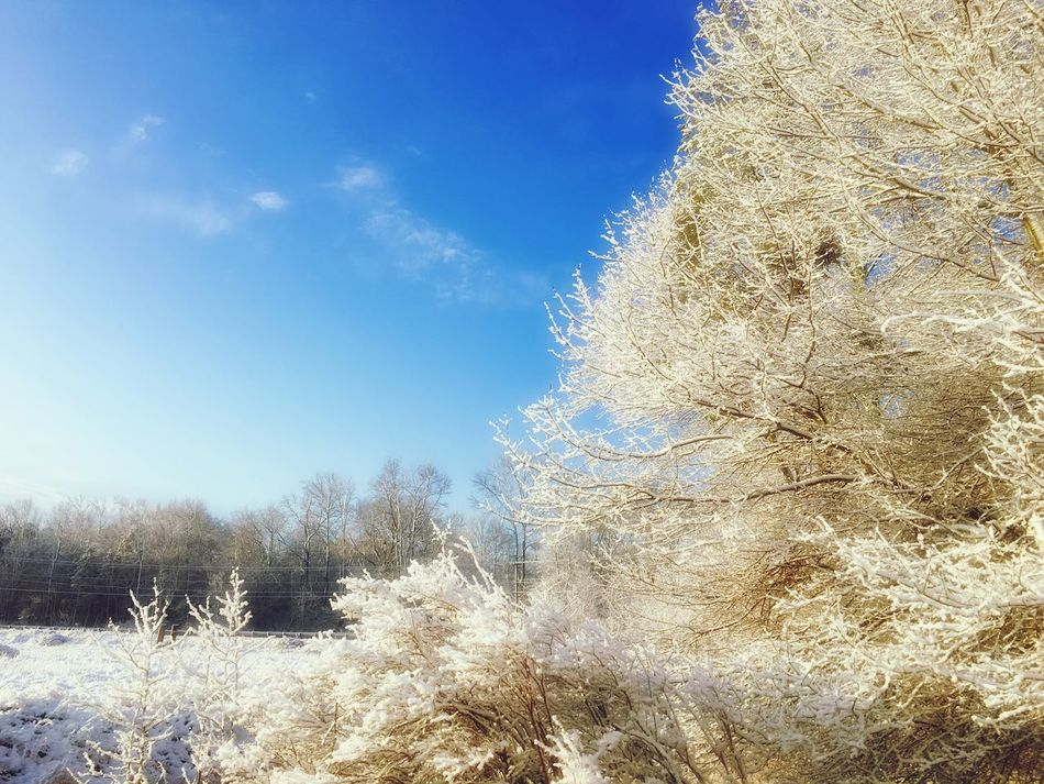 into the woods the silence between us softens ~ Bob Lucky EyeEm Nature Lover Tadaa Community Snow ❄ NJ Pinebarrens