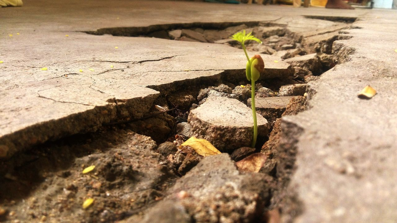 growth, young plant, plant, leaf, nature, new life, sapling, no people, outdoors, sunlight, day, close-up, fragility