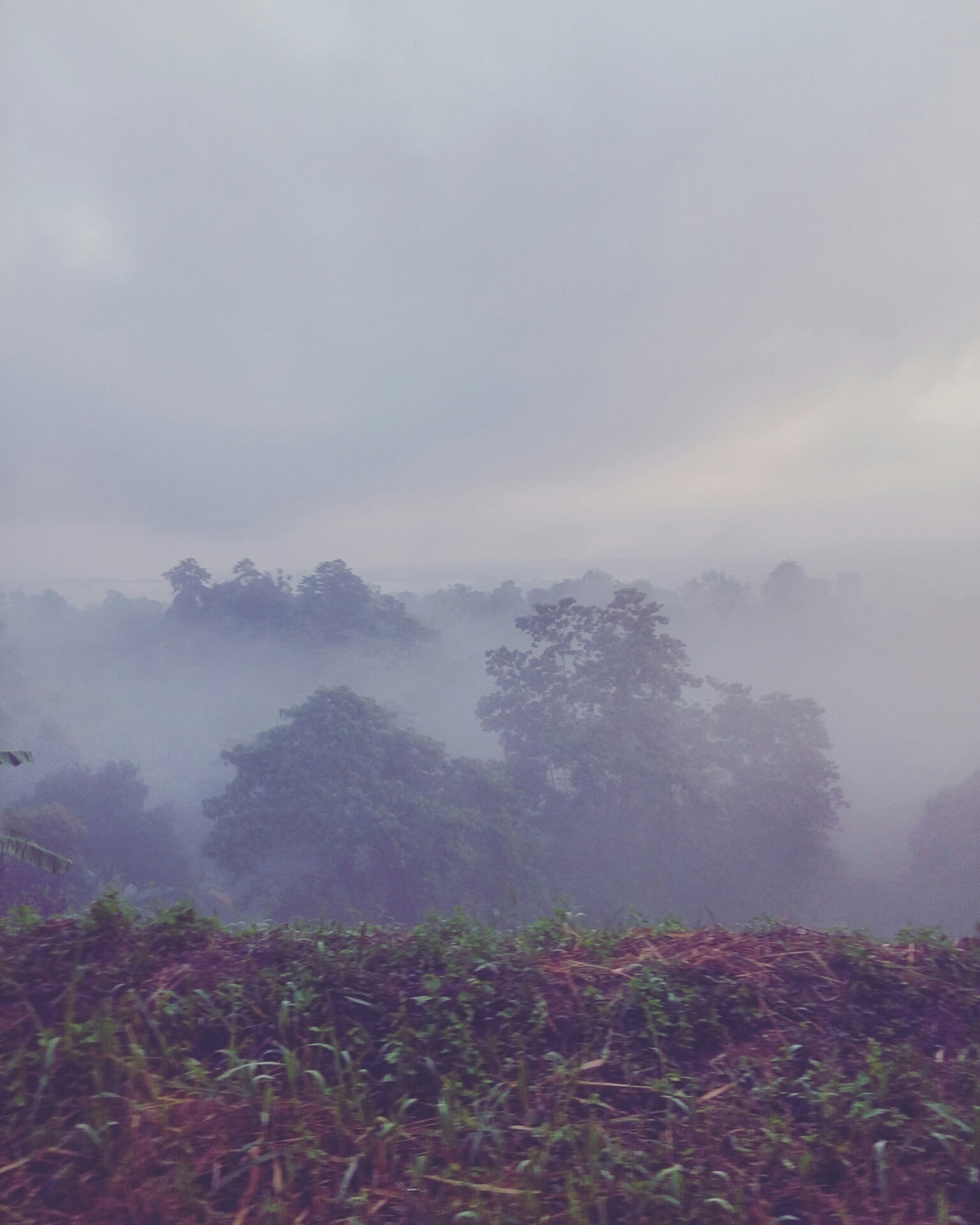 fog, foggy, tranquil scene, tranquility, scenics, beauty in nature, sky, weather, nature, mountain, landscape, non-urban scene, cloud - sky, idyllic, tree, growth, overcast, day, plant, remote