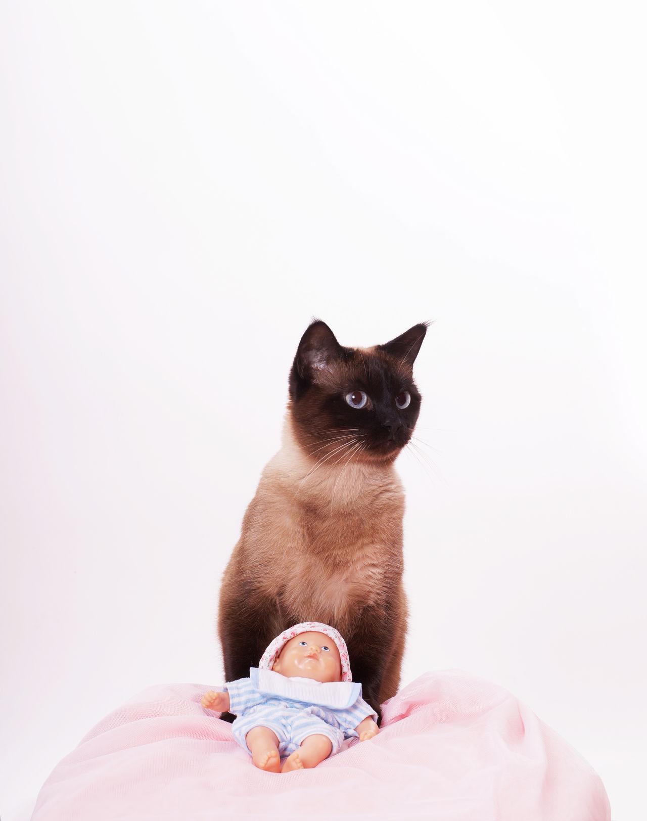 Beautiful stock photos of lustige tiere, pets, domestic animals, one animal, mammal