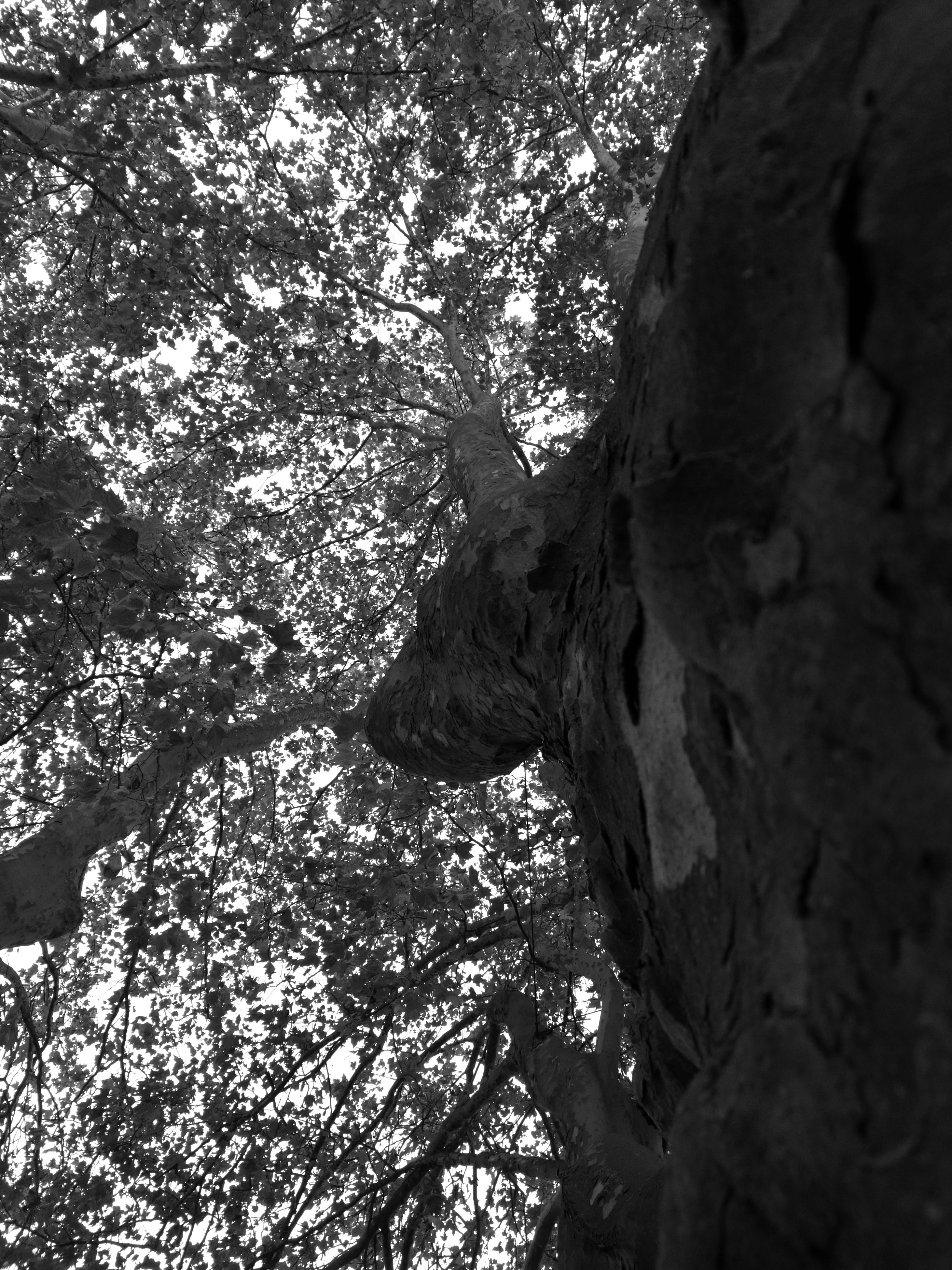 tree, low angle view, no people, animal themes, day, close-up, animals in the wild, outdoors, mammal, sky, nature