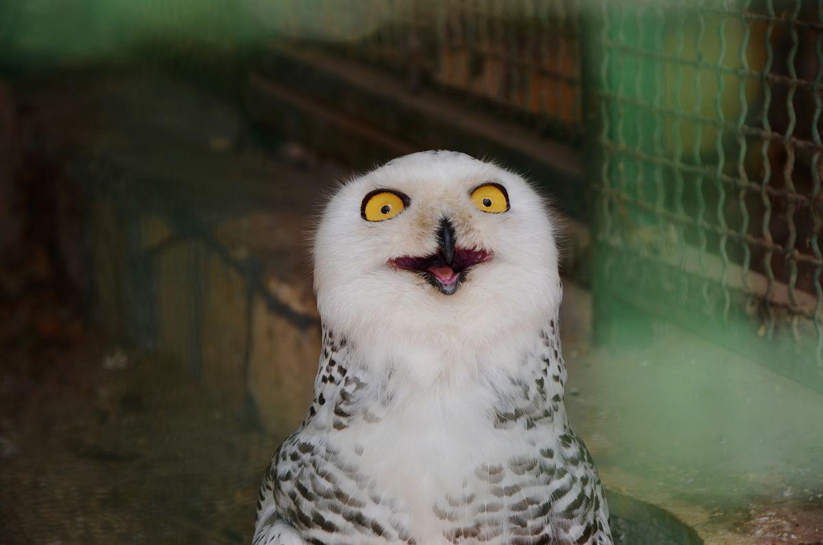 WOW Animals Animal Bird Owls Owl Birds Funny Zoo Beak Funny Face FUNNY ANIMALS Funny Faces Wooow Animal Photography EyeEm Best Shots