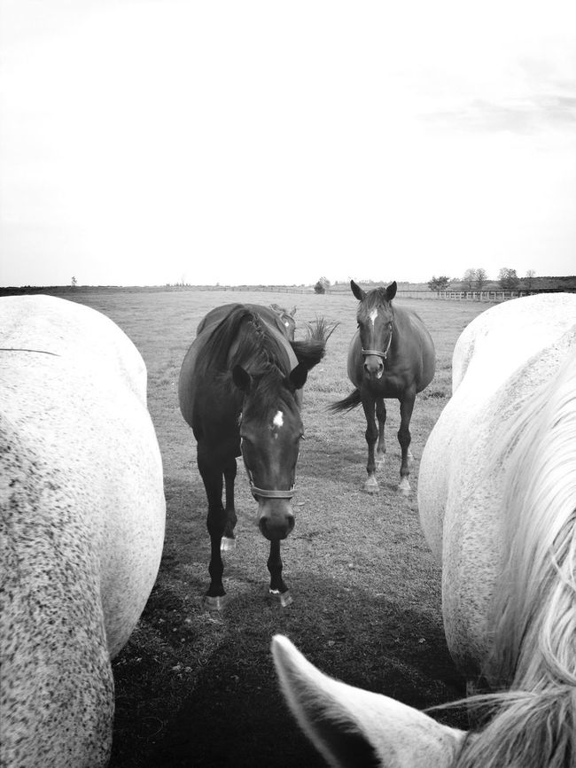Light surrounds the dark EyeEm Nature Lover EyeEm Best Shots Horse AMPt_POTD