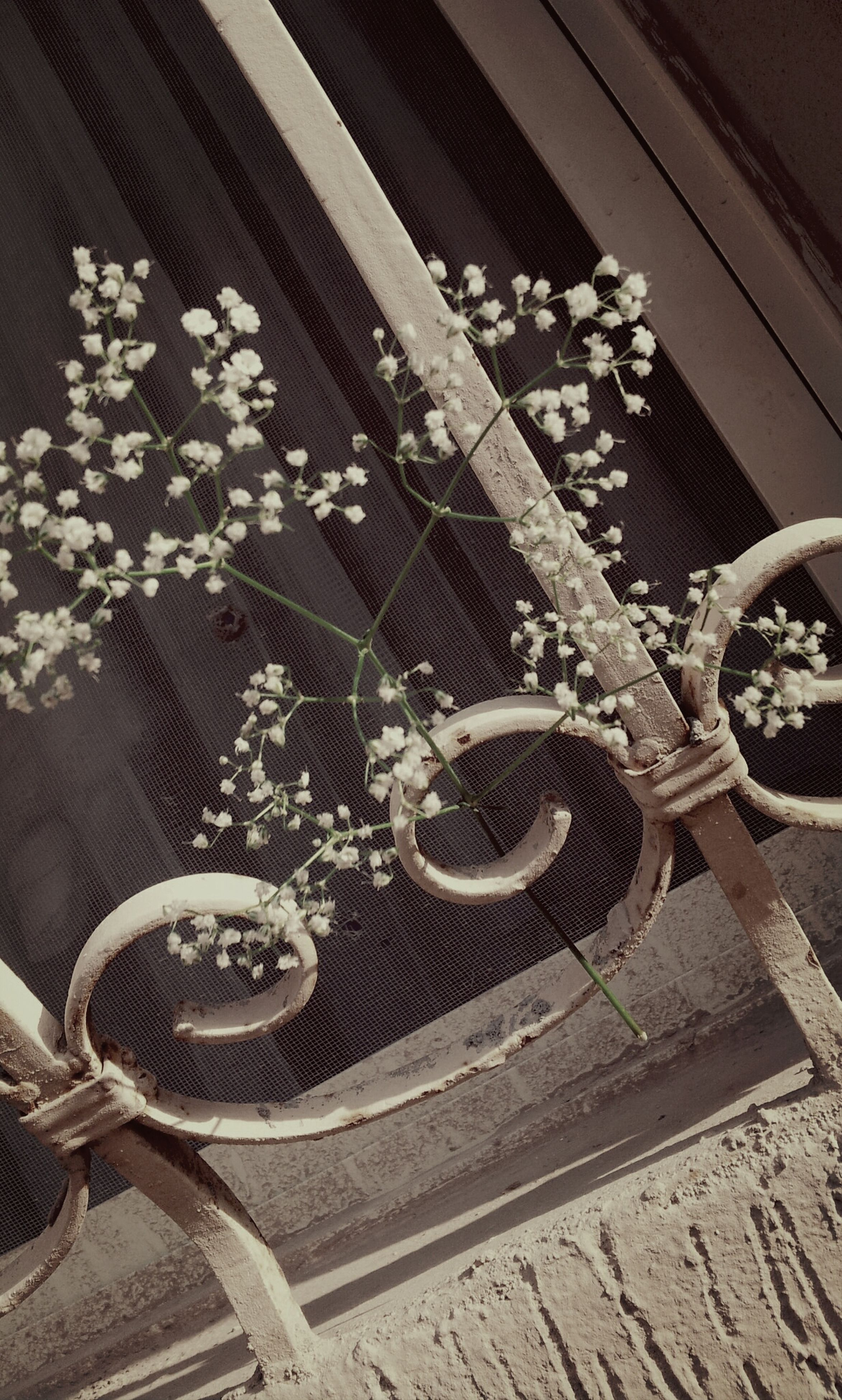 indoors, high angle view, metal, hanging, decoration, pattern, no people, bicycle, transportation, day, design, wall - building feature, flower, close-up, built structure, sunlight, land vehicle, railing, abundance