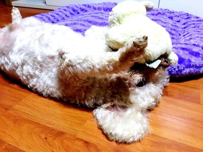 Pet I Love My Dog Having Fun Cheerfulness Relaxing