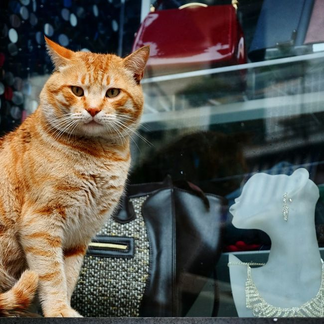 SO WHAT ? Red Cat & Shop Window Dummy VIP Cat Catsoftheworld Cats Of EyeEm Cats Of The Day Catslife Cats Lovers  Cats Colorphoto Color Photography