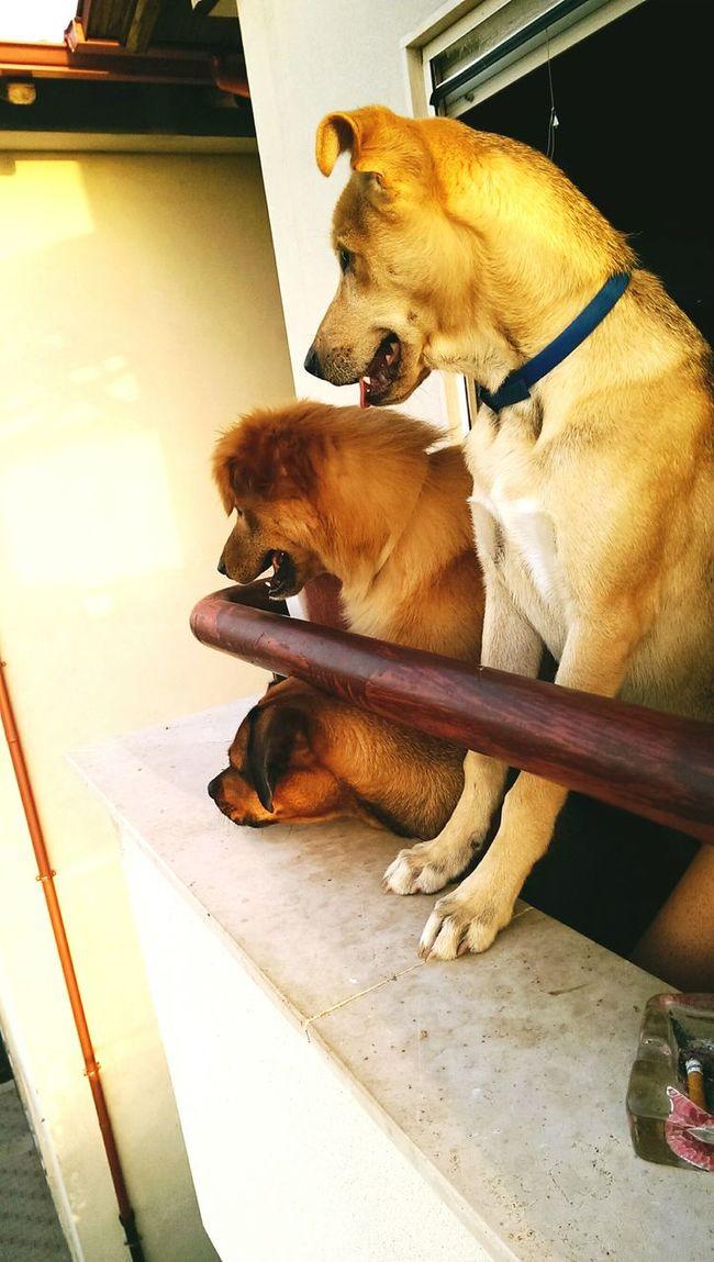 Dogslife Dogfriends Summer Watching