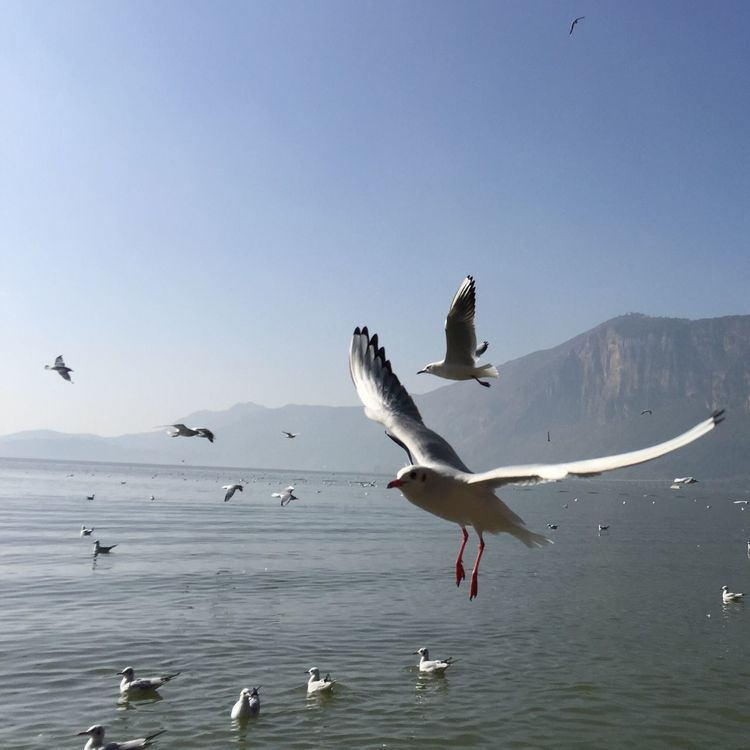 New Years Resolutions 2016 City Hello World Check This Out Kunming Seagull Birds Animals 蓝色 Taking Photos