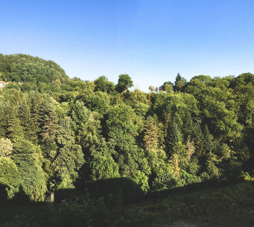 Beauty In Nature Blue Clear Sky Day Green Color Growth Nature No People Outdoors Rupit Y Pruït Sky Tree Rupit Olot, Spain