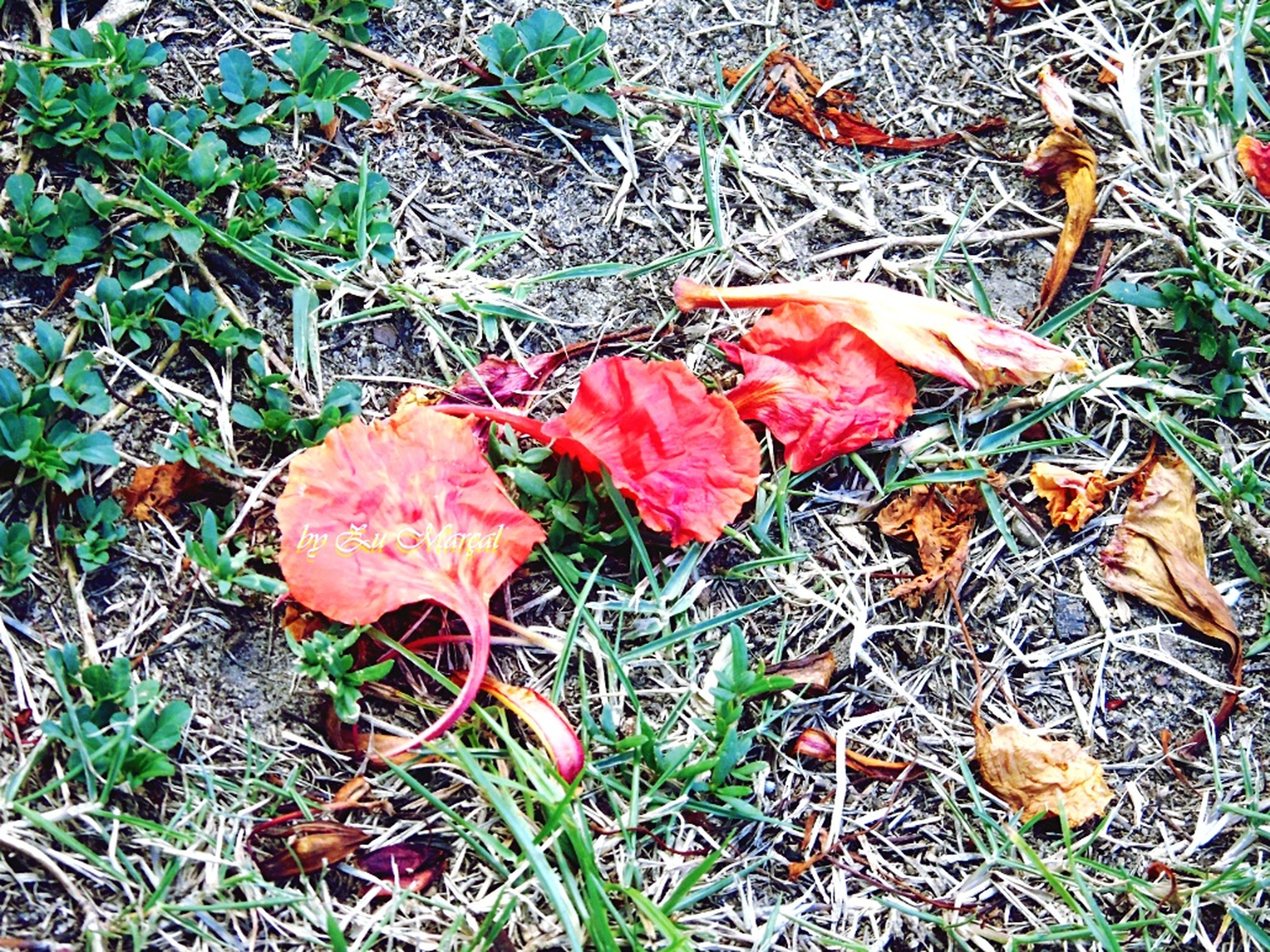 leaf, autumn, grass, change, dry, field, high angle view, nature, fallen, leaves, season, growth, plant, grassy, close-up, day, tranquility, outdoors, ground, beauty in nature