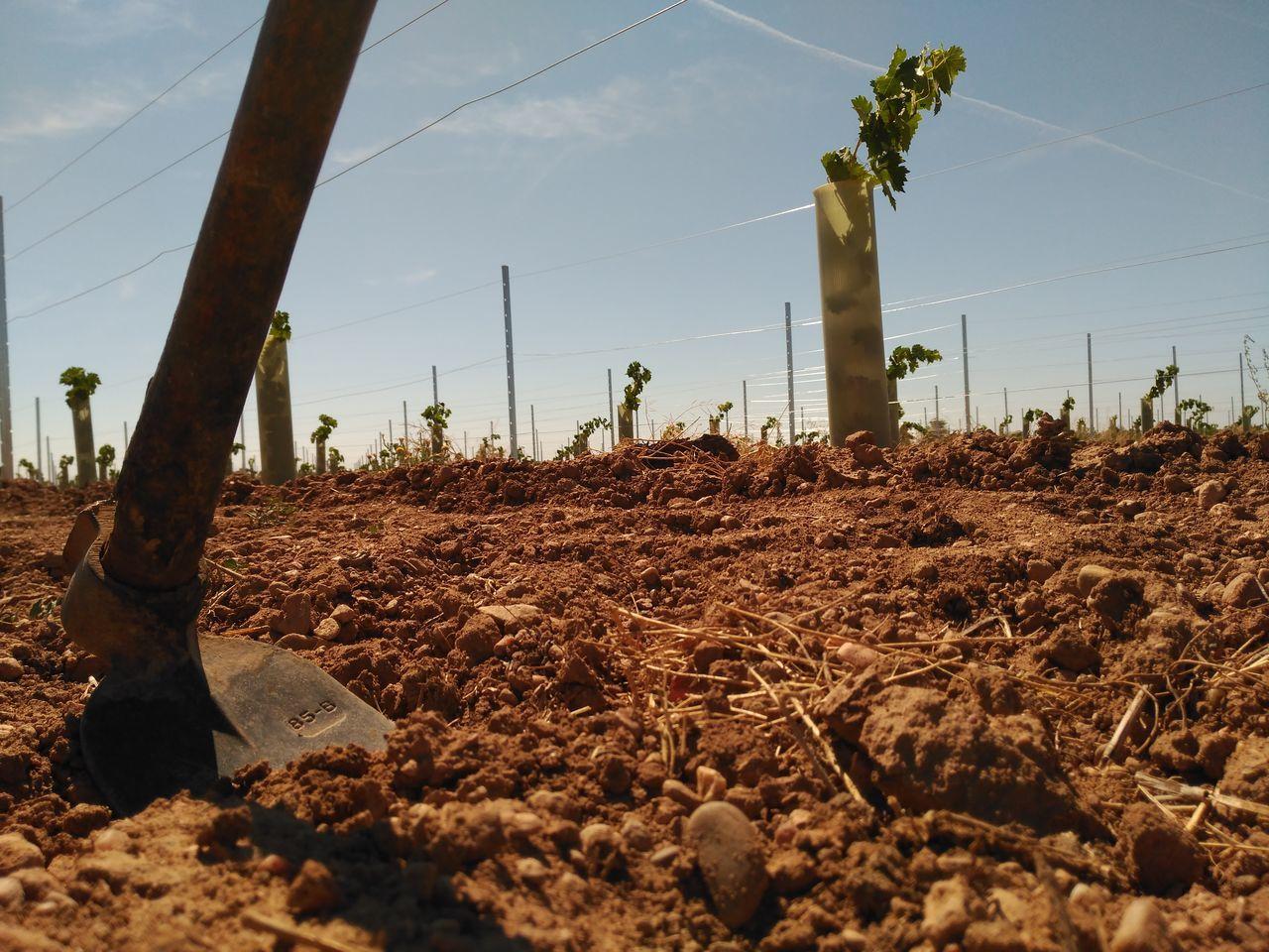 Wineyard Viña Hoe Countryside Campo CastillaLaMancha Without Filters