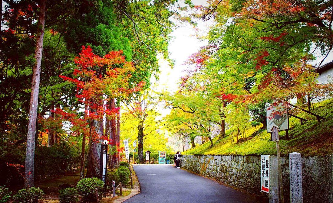 曼殊院 曼殊院門跡 曼殊院道 京都 Kyoto Kyoto, Japan 2015  Autumn Relaxing Kyototrip Autumn Colors Hello World Kyoto Autumn Enjoying Life