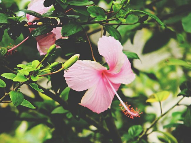 Beauty is everywhere... Santo Domingo, DR Flower Power🌼