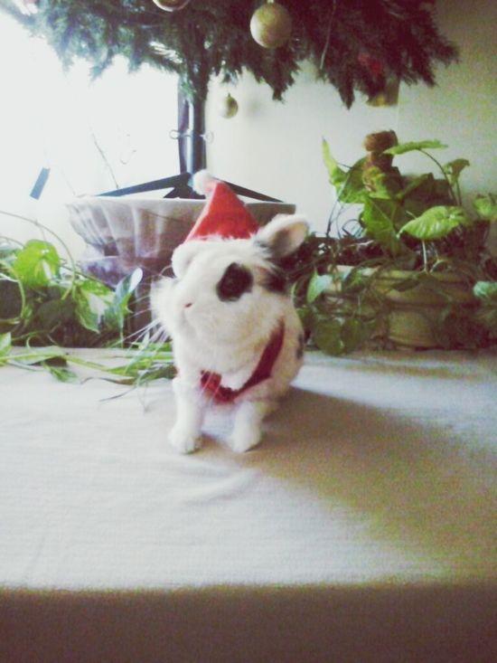 MerryChristmas Feliznavidad Peluche Rabitt First Eyeem Photo MyLove❤ Sensual 💕