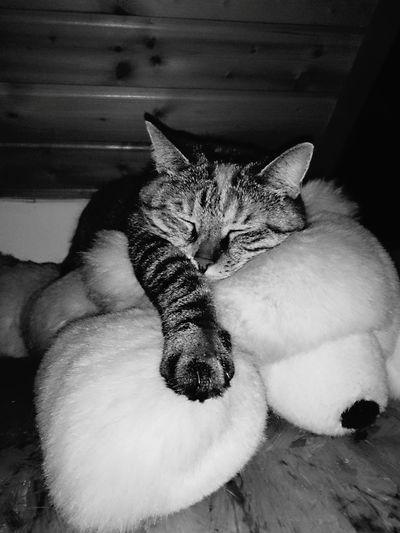 Relaxing Cats 🐱 Sleeping Cat Bildbearbeitung Tierfotografie Black And White Experimental Photography Tierisch Schön Meine Katzen Katzenfoto