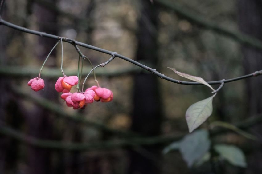 Pink Color Growth Flower Nature Freshness Beauty In Nature Fragility Close-up Focus On Foreground Petal No People Twig Leaf Plant Blooming Outdoors Day Tree Flower Head Bokeh Fuji-xe2s Macro Showcase: November Tenebrio.photos Zeiss60mm