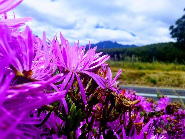 Australian Bushland Australia Australian Landscape Overcast Flowers EyeEmNewHere GALAXY S4