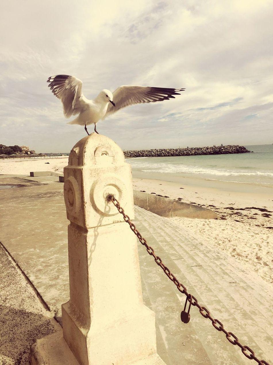 Seaside Is where I Like