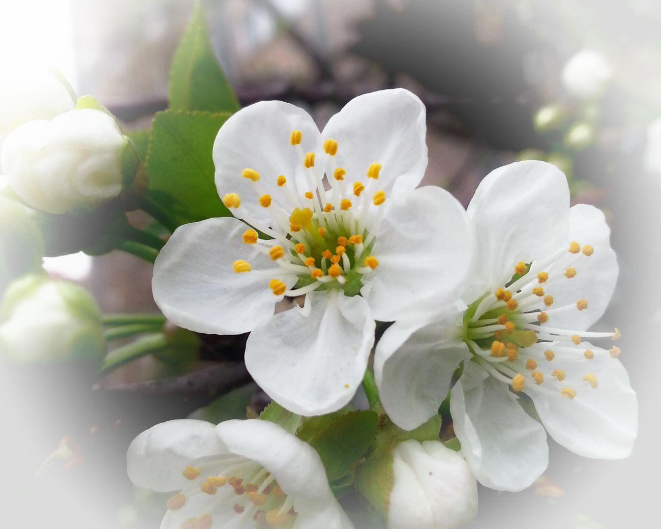Flowers Flower Porn Spring Flowers Bisgen