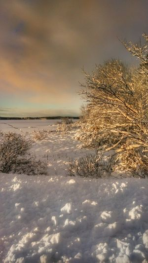Morning Light... Mainephotographer Maine Winter Snowscape Newenglandphotographer Mainephotography NewEnglandWinter New England Charm Mainethewaylifeshouldbe Maine Scenery Cold Temperature Snow Covered Mainelife