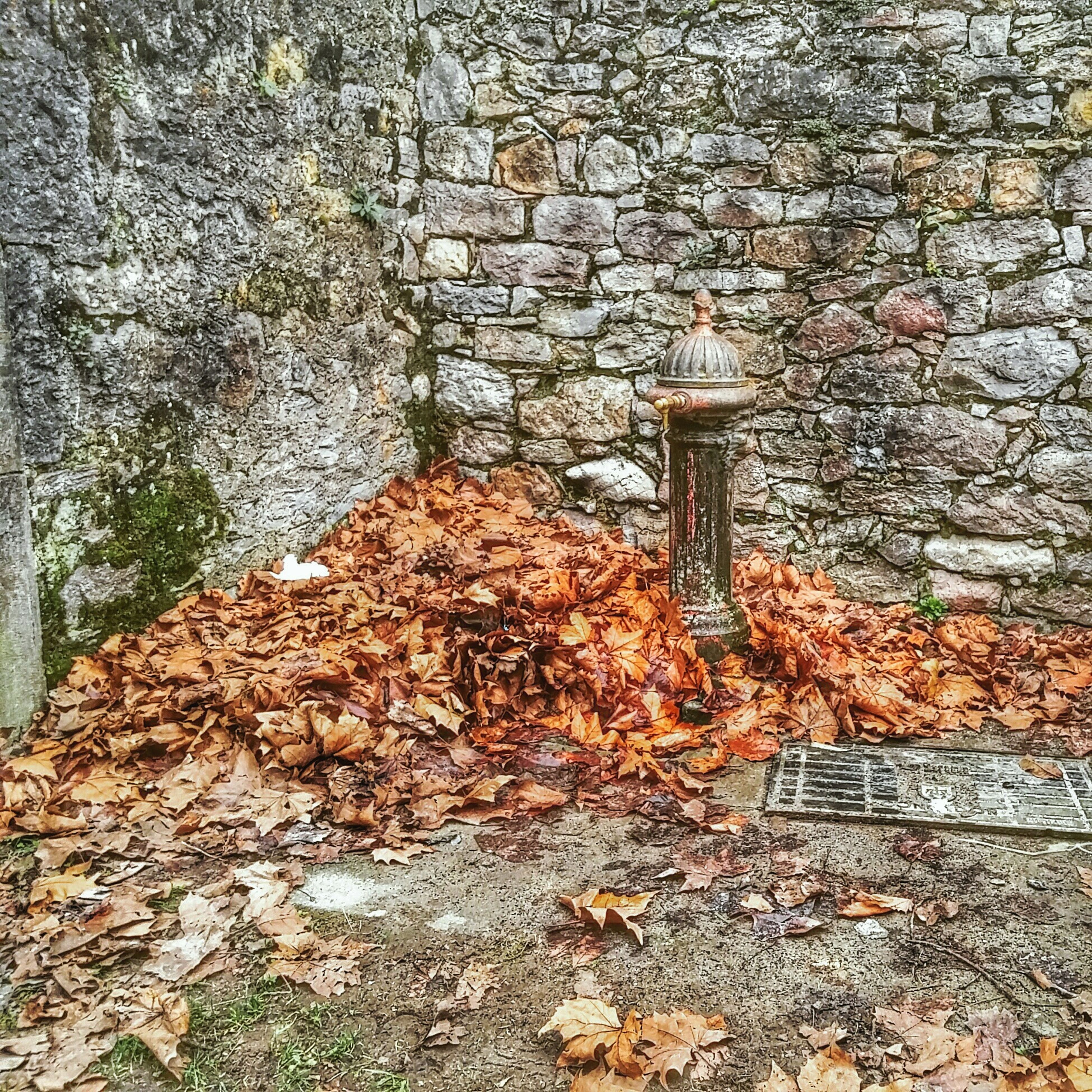 autumn, leaf, dry, change, fallen, season, leaves, nature, day, tranquility, falling, outdoors, high angle view, plant, no people, tree, wood - material, growth, forest, tree trunk