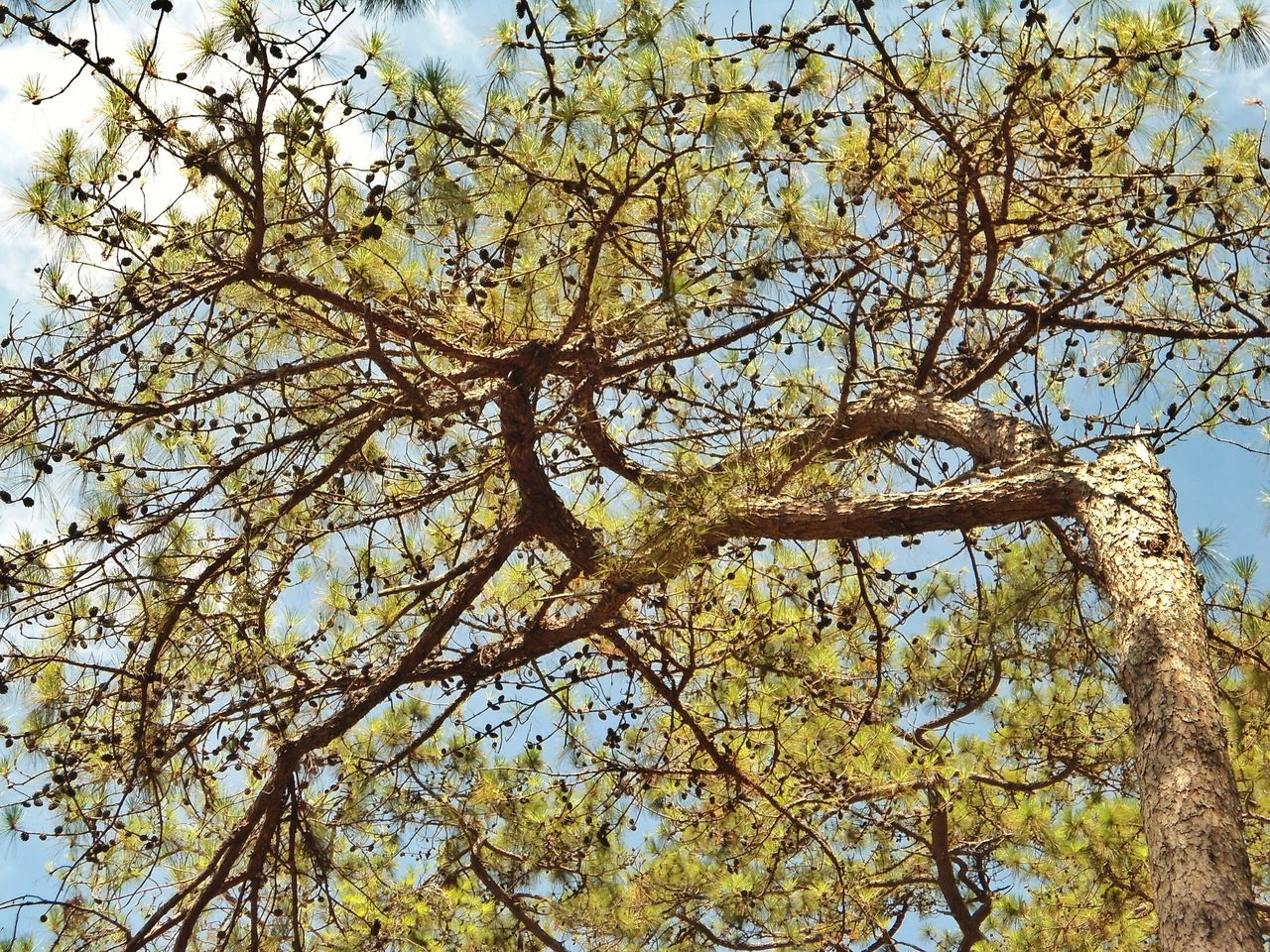 Low Angle View Tree Nature Growth No People Sky Beauty In Nature Full Frame Branch Outdoors Backgrounds Day Tranquility Sunlight Trees EyeEmBestEdits EyeEm Best Shots Best Shots EyeEm Best EyeEm Shot Beauty In Nature Tree Trees_collection Layers And Layers Low Angle View