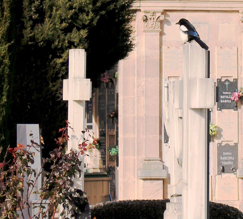 Cementeriosdeespaña Cemeterybeauty Cemetery_lovers Cemetery_shots Cemetery Series Paz