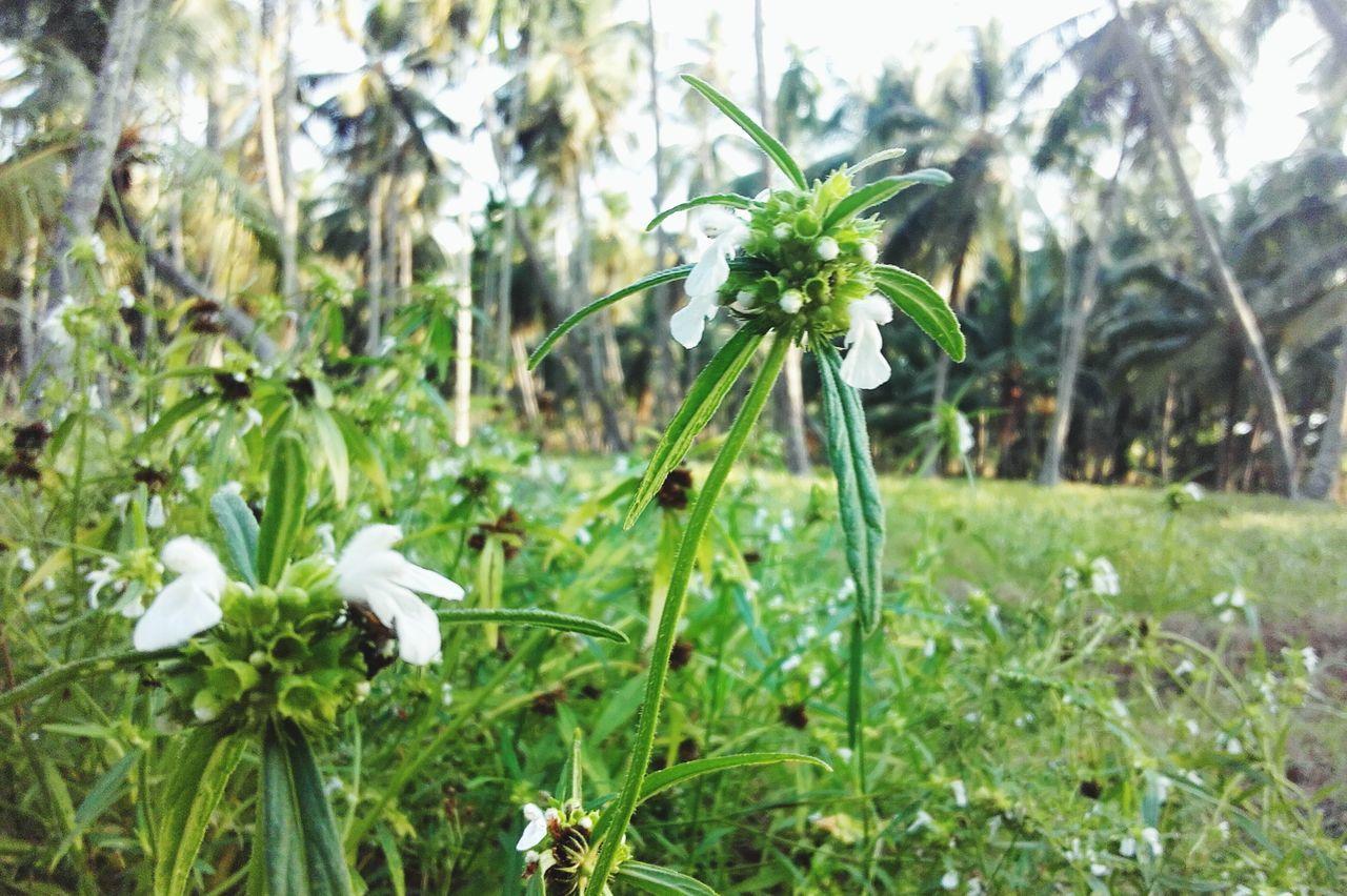 "@ Afternoon Time Pass  Small Flowers Greenery Kerala's Bueaty called ""thumpa poov"" Traditional Flower Nithibgireesh"