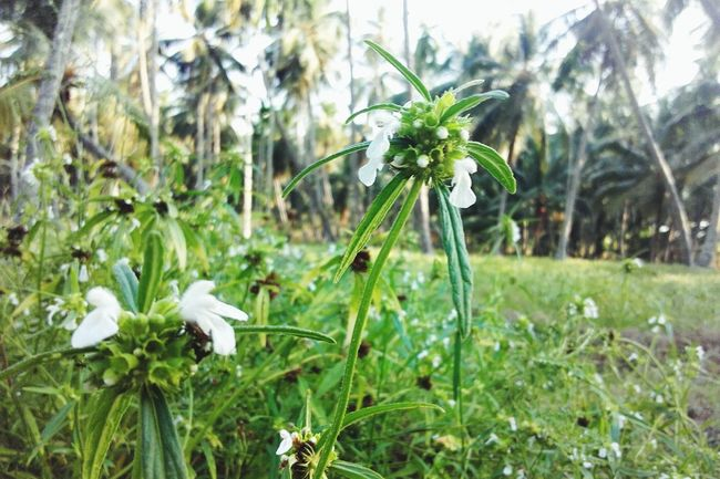 "@ Afternoon Time Pass  Small Flowers Greenery Kerala's Bueaty called ""thumpa poov"" Traditional Flower"