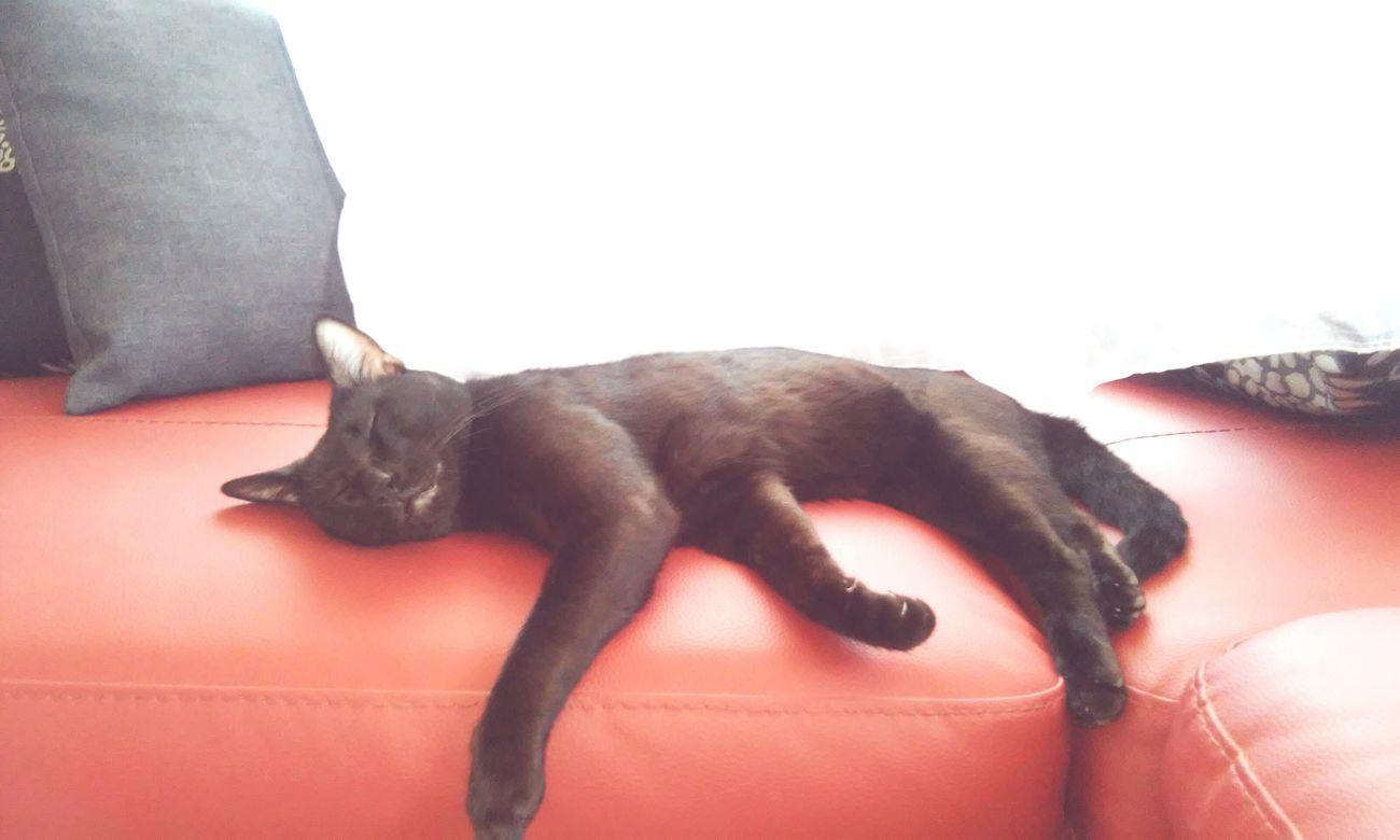 BLackCat Descansando Relax Dormindo