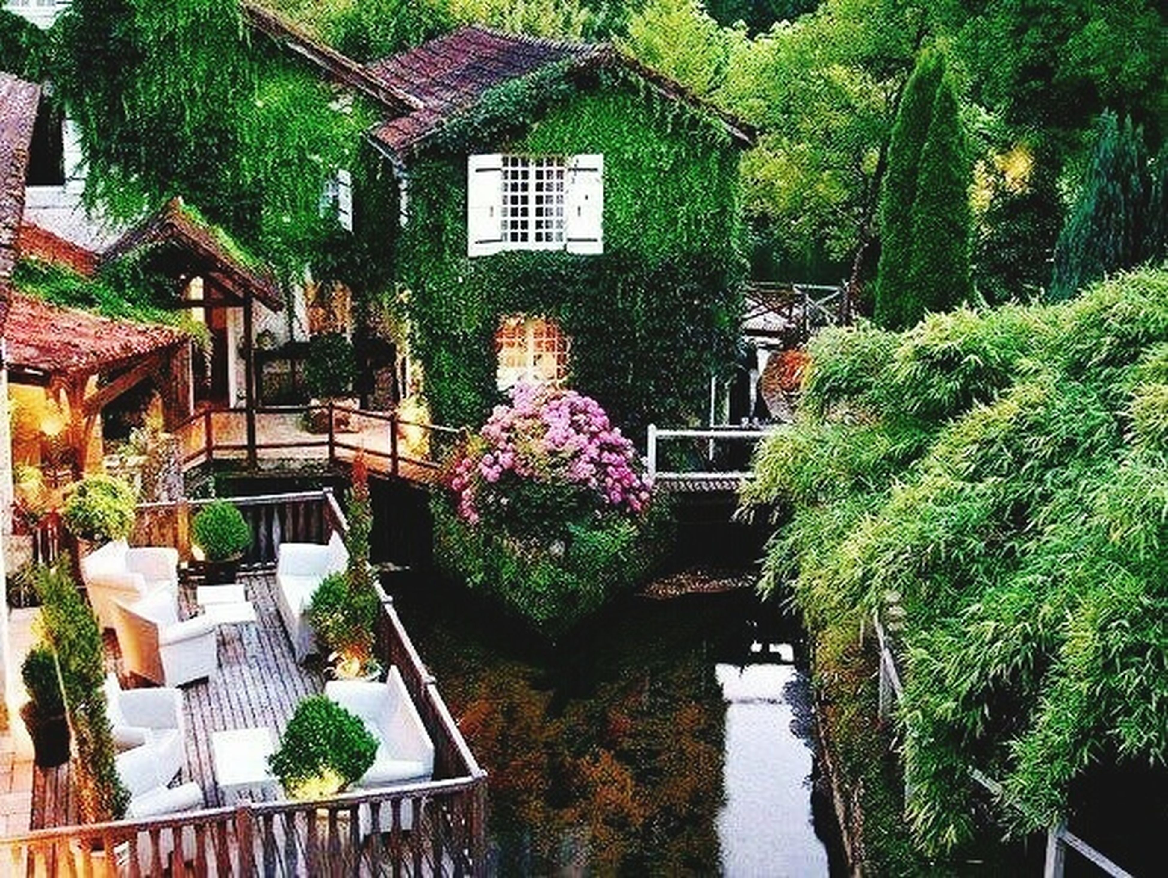 building exterior, built structure, architecture, tree, growth, plant, flower, house, water, nature, railing, potted plant, green color, residential structure, residential building, beauty in nature, outdoors, day, no people, freshness