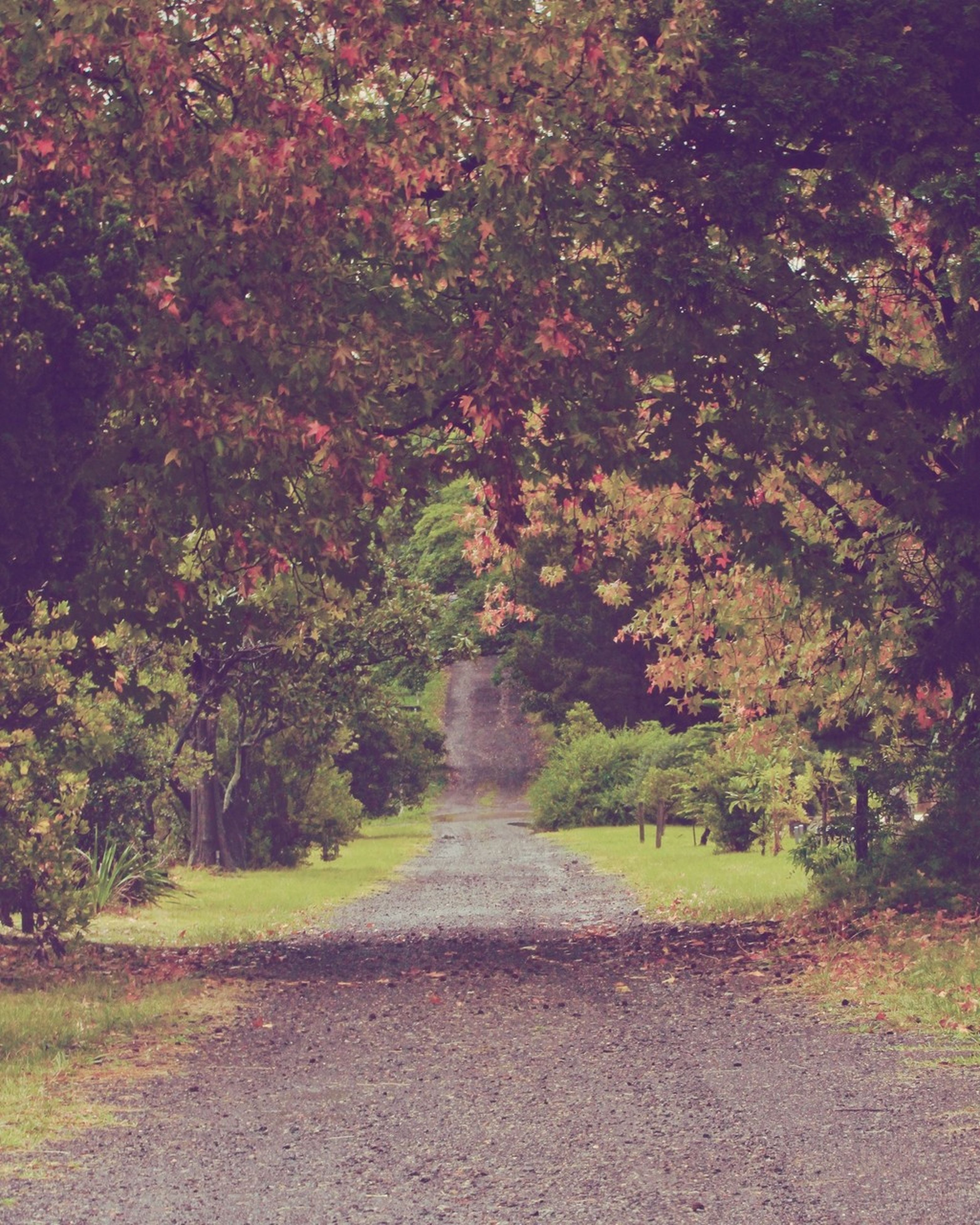 tree, the way forward, growth, tranquility, nature, beauty in nature, footpath, tranquil scene, autumn, diminishing perspective, leaf, change, scenics, road, plant, vanishing point, park - man made space, green color, outdoors, pathway
