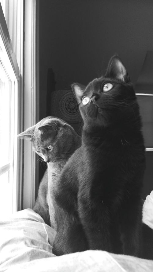 The most Contemplative of Cats. Catsoneyeem Blackandwhite Silly
