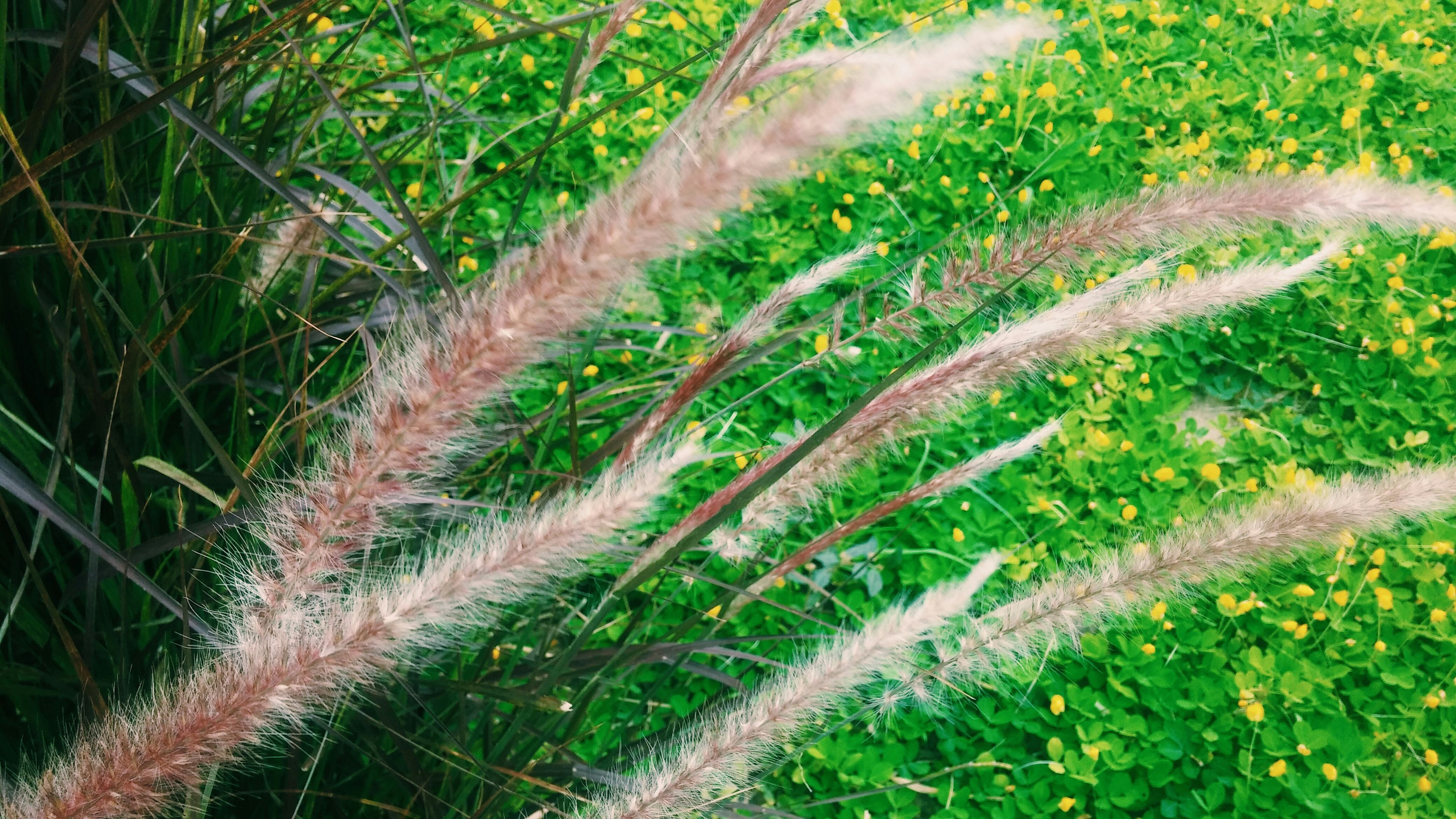 growth, grass, green color, plant, nature, field, tranquility, beauty in nature, close-up, day, high angle view, outdoors, growing, no people, green, focus on foreground, freshness, sunlight, tree, grassy