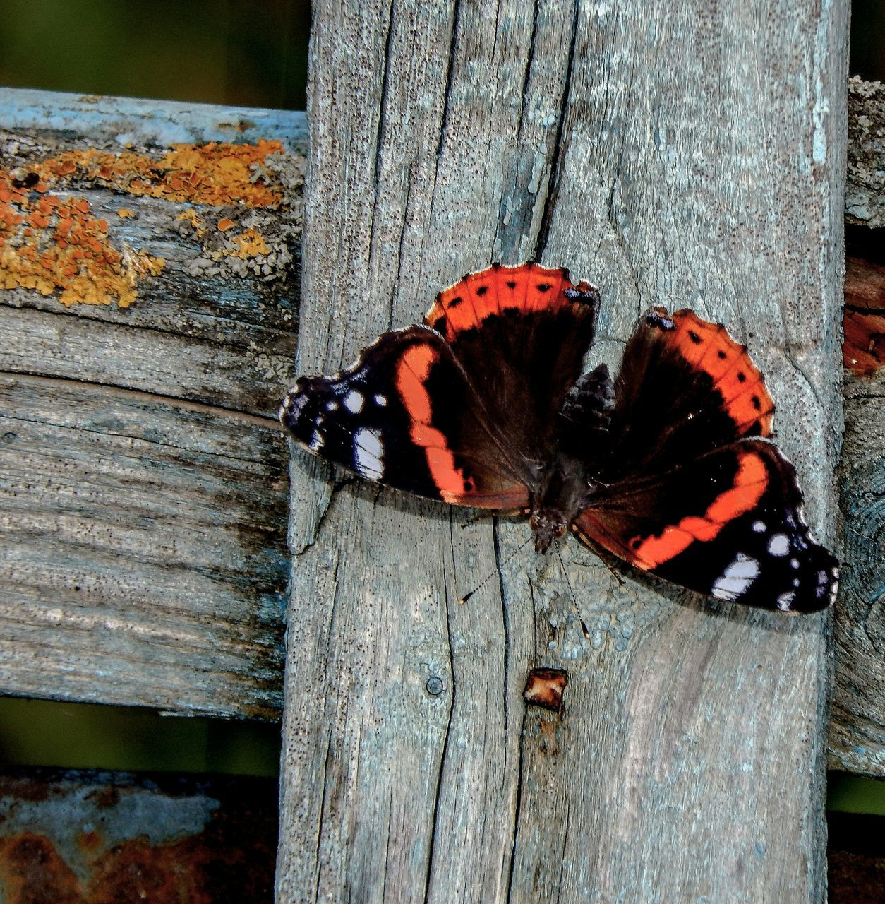 High Angle View Of Butterfly On Wooden Plank