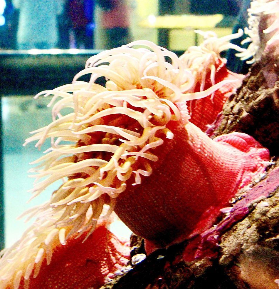 A day at Vancouver Aquarium Sea Plant Close-up Indoors  Photography Random