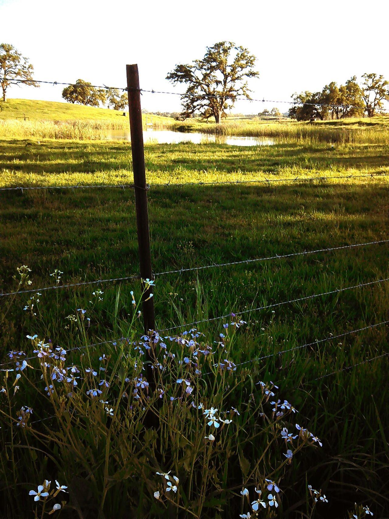 Loudthougts EyeEm Nature Lover Deadend Miles Mighty Oaks SpringFever Its Been10feet Thankful
