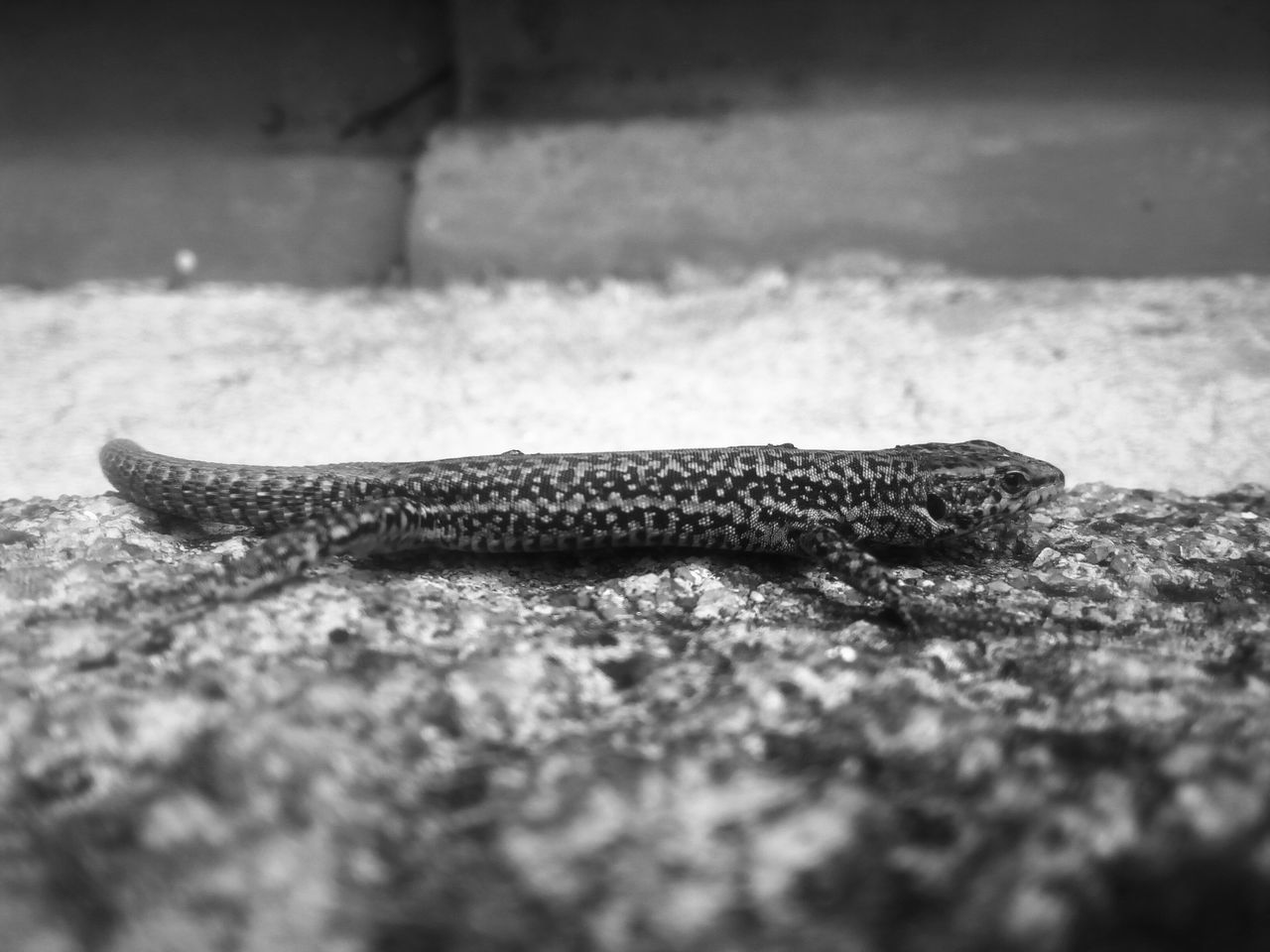Salamander 👊 Taking Photos Check This Out Contrast Edit Photo HASHTAG Bqaquaris M4.5 Summer Summertime Focus Randomshot Poser ❤ Wildlife
