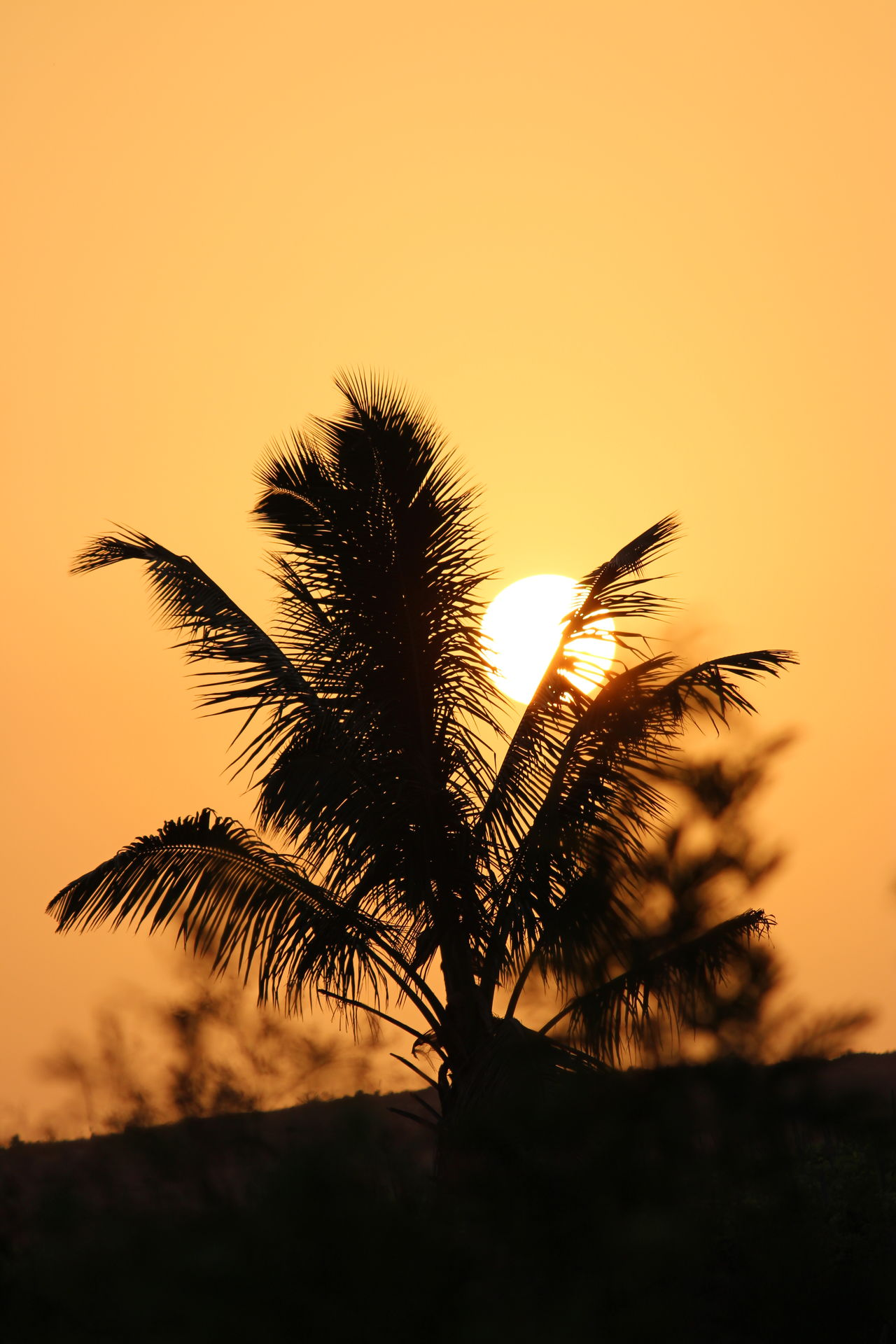 Sunset Silhouette Nature Tree No People Plant Outdoors Growth Beauty In Nature Uncultivated Sky Low Angle View Palm Tree Rural Scene Plant Part Close-up Day Flower Head First Eyeem Photo Break The Mold EyeEmNewHere The Photojournalist - 2017 EyeEm Awards The Portraitist - 2017 EyeEm Awards The Great Outdoors - 2017 EyeEm Awards The Street Photographer - 2017 EyeEm Awards The Architect - 2017 EyeEm Awards