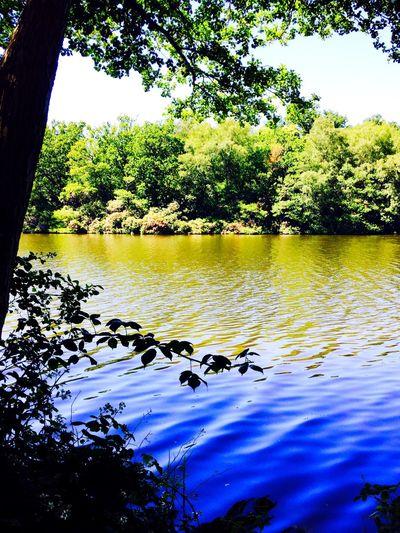 EyeEm Nature Lover Enjoying The Veiw  River Nature On Your Doorstep Beauitful Wildlife Love