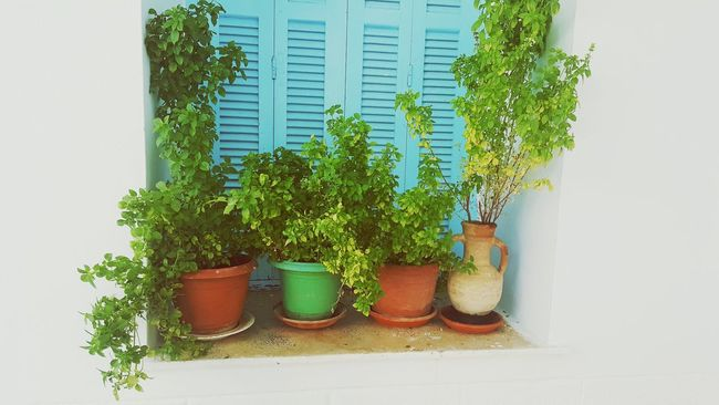 At Home :) At Home At Home Sweet Home Growth Plant Wall Potted Plant Green Color Day Tree Green Window Sill