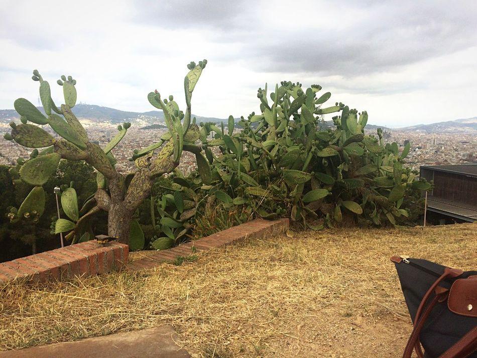 I just love plants Green Plants 🌱 Nature Nature_collection Cactus Cactus Garden Cactus Flower