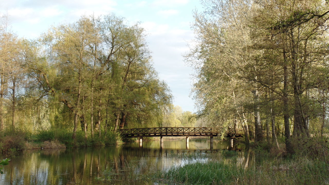 Beauty In Nature Bridge - Man Made Structure Day Growth Lush - Description Nature Nature No Edit/no Filter No People Outdoors Samsung Samsungphotography Scenics Sky Spring Tranquil Scene Tranquility Travel Destinations Tree Water Willow Tree