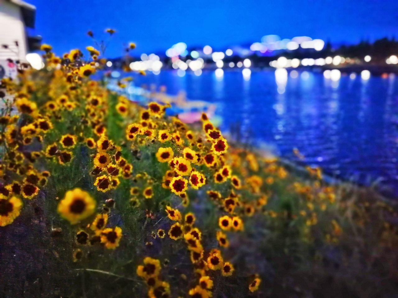 플라워 Beauty In Nature Flower Nature