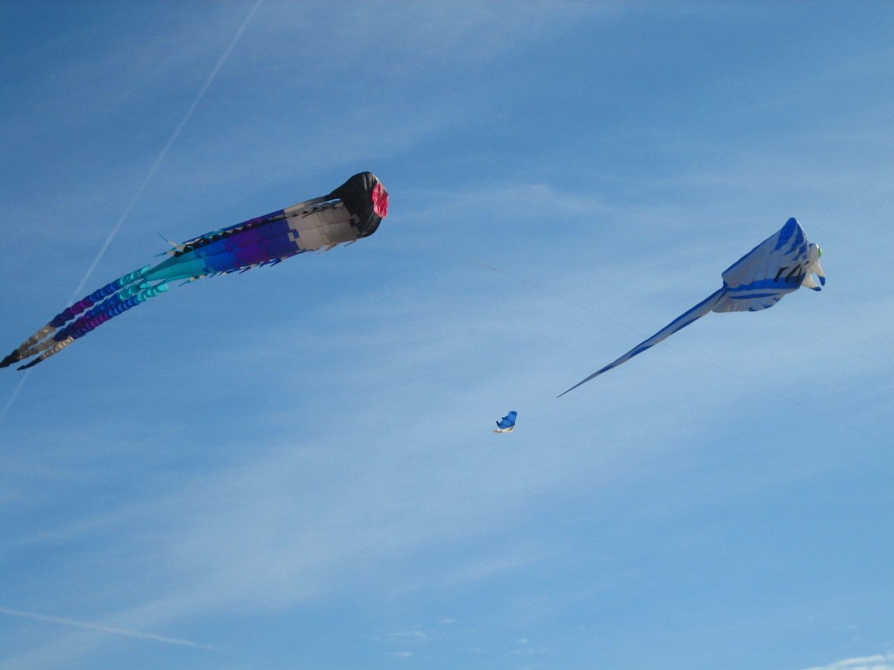 Kite Flying Kite Kites Blue On Blue  Kite In The Sky Kite In Flight Blue Kite Kite On The Beach International Kite Festival Multi Colored Flying High Flying Cometa Showcase April Sky_collection Leisure Activity Freedom Cometas Air Borne Two Kites Blue Wave