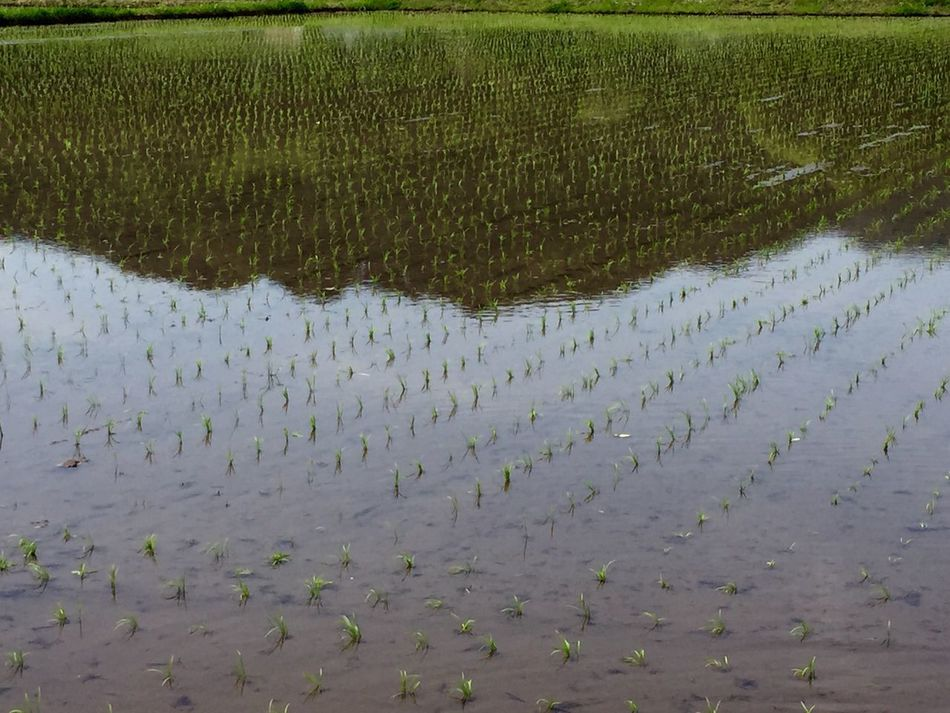 Japan Agriculture Field Water Non-urban Scene Rice Field