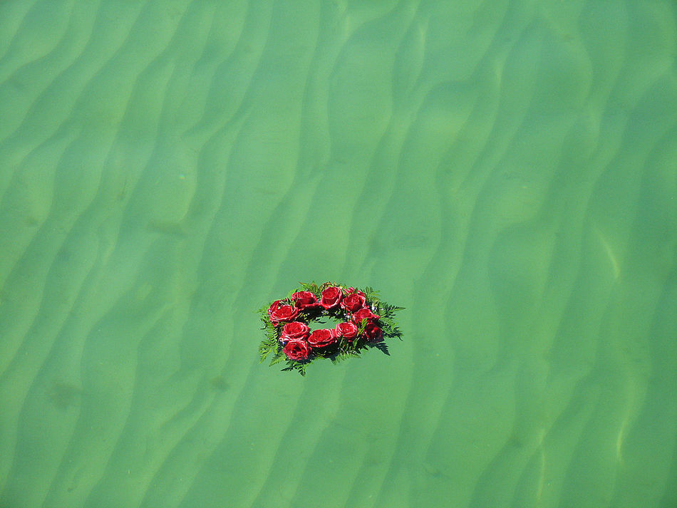 Baltic Ocean Beauty In Nature Colorful Driving Flower Flower Ring Flowers In The Water Free Nature Freshness Green Green Color Green Water In The Wave Multi Colored Nature No People Red Vibrant Color Warnemuende